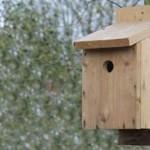 Направи си сам къщичка за птици