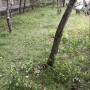 Зелени площи - състояние преди облагородяване
