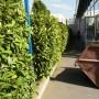 Поддръжка на жив плет и декоративна растителност - Moto Pfohe София