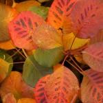 Седмични задачи в градината за началото на ноември